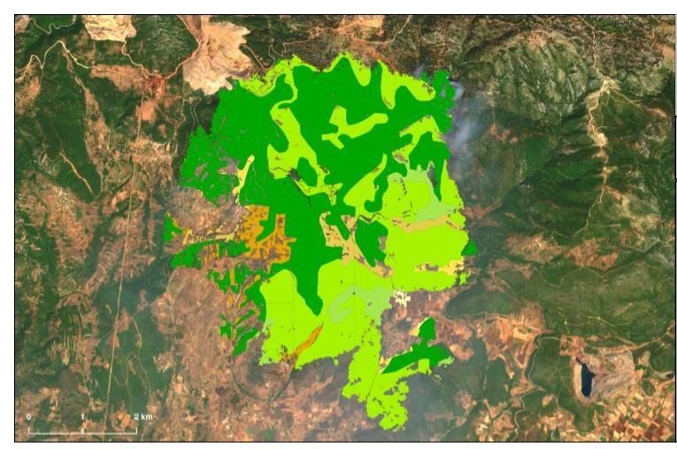 """Σ. Φάμελλος: """"Η Κυβέρνηση της Νέας Δημοκρατίας ακυρώνει τους δασικούς χάρτες κάνοντας ρουσφέτια εις βάρος του Συντάγματος"""""""